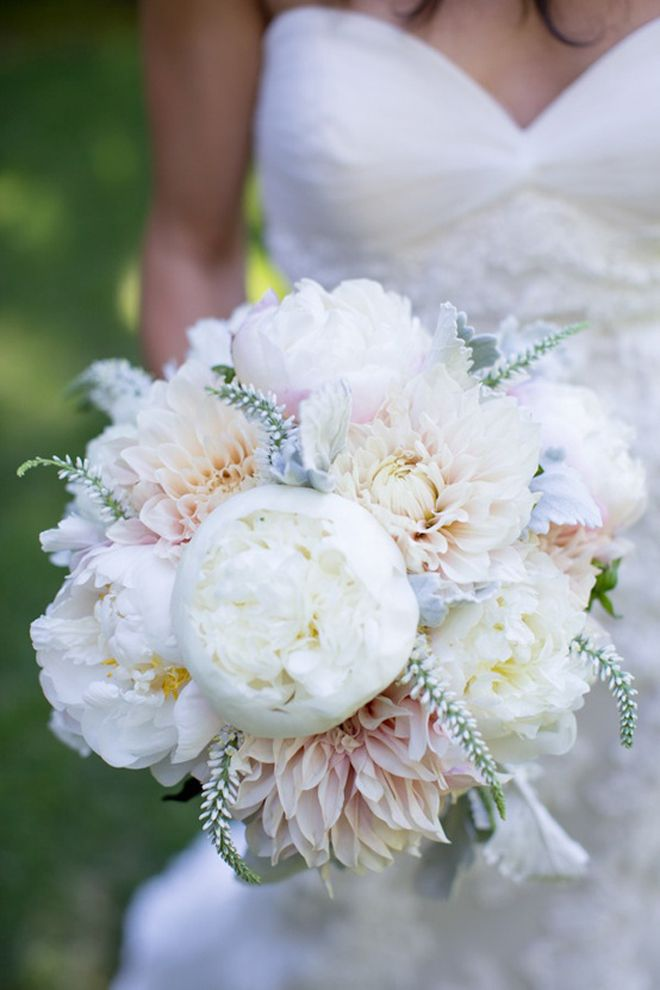 How To Propagate Bridal Bouquet Plant : Wedding flowers